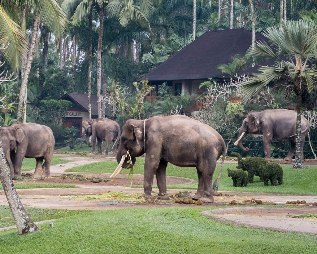 Elefantes en el parque Mason Park & Lodge - Bali, Indonesia