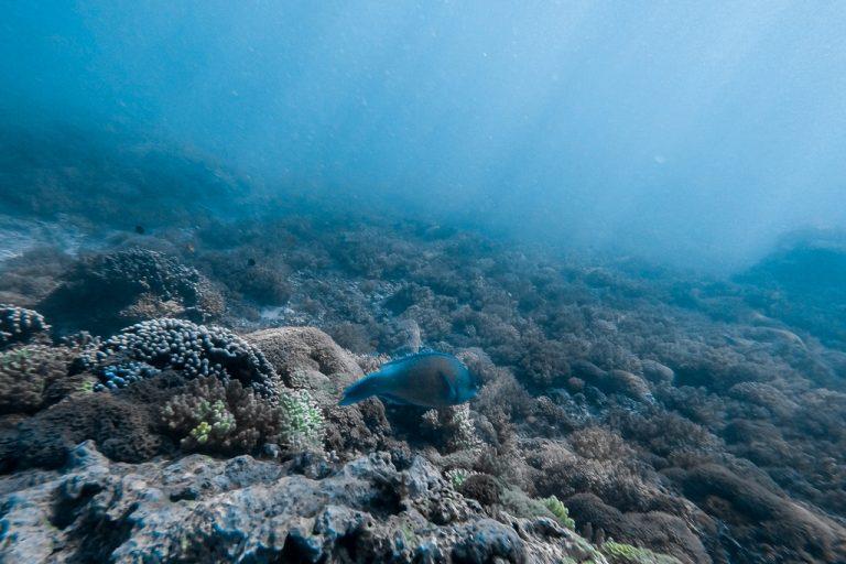 Gili Trawangan Sea Bottom -Lombok, Indonesia