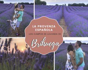Lee más sobre el artículo La Provenza Española: los campos de lavanda de Brihuega (Guadalajara)