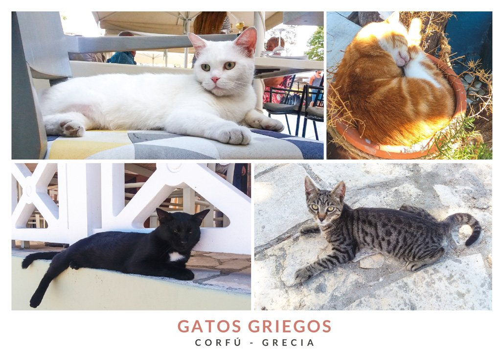 Postal con varias imágenes de gatos griegos
